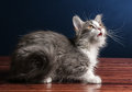 Giovane kitten cat looking up Fotografia Stock