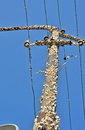 Gipsy moths a close up of pole with Stock Photo