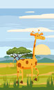 Giraffe on the background of the African landscape, savanna Royalty Free Stock Photo