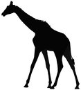 Giraffe black silhouette of Stock Photo