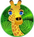 Giraffe cartoon Royalty Free Stock Image