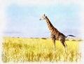 Giraffe colorful painting at Falls national park