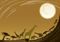 Giraffe family in africa under beautiful moon nigh Stock Image