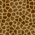 Giraffe fur texture Stock Images