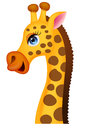 Giraffe head cartoon Stock Images