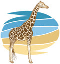 Giraffe illustration vector of a Royalty Free Stock Photo