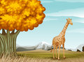 A giraffe near the big tree Stock Photography