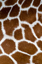 Giraffe pattern Stock Images