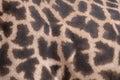 Giraffe Skin Closeup Royalty Free Stock Photo