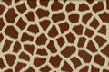 Giraffe skin texture Royalty Free Stock Photo