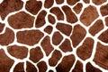Giraffe spots Royalty Free Stock Photo
