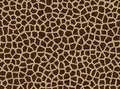 Giraffe spots, giraffe fur Royalty Free Stock Photo