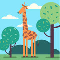 Giraffe standing tall and eating some tree leafs Royalty Free Stock Photo