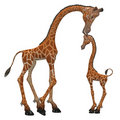 Giraffe toon Stock Photography