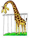 Giraffe zoo africa drawing humour lattice neck cartoon Royalty Free Stock Photos