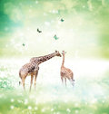 Giraffes in friendship or love concept image two mother and child theme at a fantasy landscape Royalty Free Stock Photos