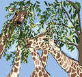 Giraffes having meal hand drawing style realistic illustration Royalty Free Stock Photo