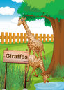 Giraffes inside the wooden fence illustration of Royalty Free Stock Photography