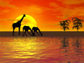 Giraffes silhouette Stock Photos