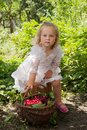 Girl with basket of cherries eating in the garden Stock Images