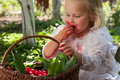 Girl with basket of cherries in the garden Stock Photo