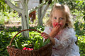Girl with basket of cherries in the garden Stock Photos