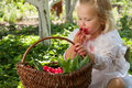 Girl with basket of cherries in the garden Stock Image