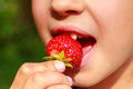 Girl, bites eating, ripe strawberries close-up view. Royalty Free Stock Photo