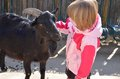 Girl with a black goat three year old talks to Royalty Free Stock Images