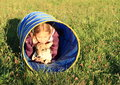 Girl in blue kids tunnel little lying for with a puppy Royalty Free Stock Image