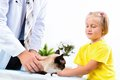 Girl brought the cat to the veterinarian examines a Stock Image