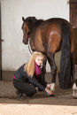 Girl brushes her pony is brushing the legs of brown new forest Royalty Free Stock Photography