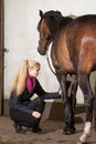 Girl brushes her pony is brushing the legs of brown new forest Royalty Free Stock Photos