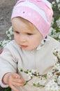 Girl among cherry tree blossom Stock Photos
