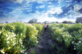 girl child walking into flower fields Royalty Free Stock Photo