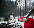 Girl in costume Little Red Riding Hood with dog malamute like a Royalty Free Stock Photo
