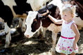 Girl and a cow Royalty Free Stock Photo