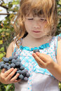 Girl with curly hair eating grapes in vineyard Royalty Free Stock Image
