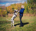 Girl dancing with a dalmatian beautiful blonde in blue jacket and black jeans dances her dog breed in nature among green grass and Stock Photography
