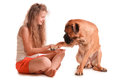 Girl and dog bullmastiff happy playful teenage a isolated on white background Royalty Free Stock Photos