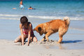 Girl and dog digging a hole at the beach Royalty Free Stock Photo