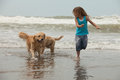 Girl with dogs at the beach little playing Royalty Free Stock Photos