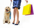 Girl in dress with the dog and packages Stock Photography