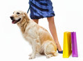 Girl in dress with the dog and packages Stock Images