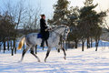 Girl on dressage horse in winter Royalty Free Stock Image