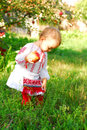 Girl dressed in a romanian traditional costume one year little she is sitting the orchard with an apple her hand an apple tree Royalty Free Stock Image