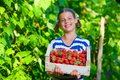 Girl eating cherries beautiful smiling holding a box of strawberries in garden Royalty Free Stock Image