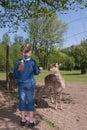 Girl feeding animal Royalty Free Stock Photo