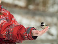 Girl feeding black caped chickadee seeds Royalty Free Stock Photos