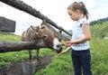 Girl feeding donkey carrot. Royalty Free Stock Photo